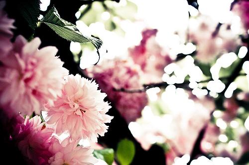 zen blossoming enlightenment